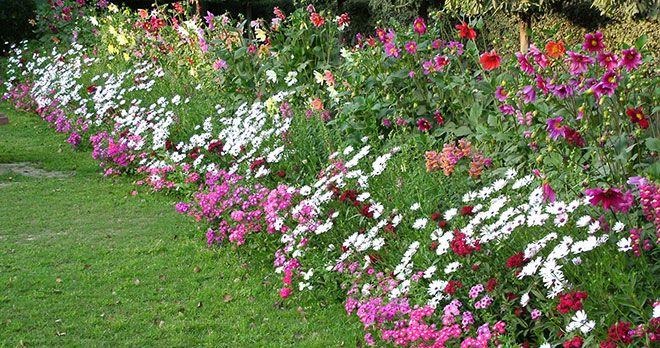 planera en trädgård - Google Search