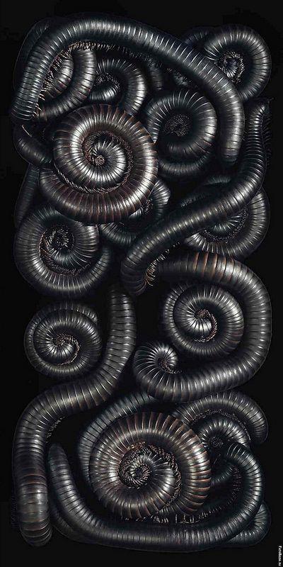 """Millipedes"" by photographer Tim Flach"
