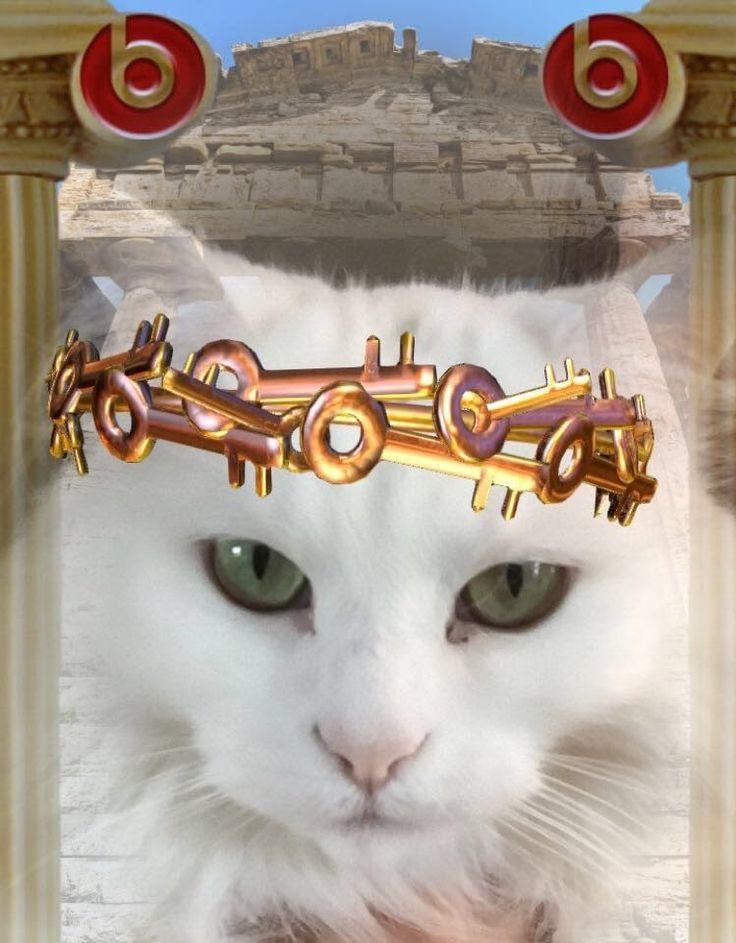 follow me on IG missbettywhite2009 #cat #lol #whitecat #betch #bitch #longhairdontcare #funny #humor #animals #pets #rescue #bettywhite #snapchat #Europe #travel #roman #toga