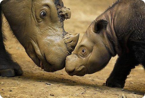 19.01.2010 в 12:35Пишет Ksan: Странные и редкие животные. В этом посте будут страшные, противные, милые, добрые, красивые, непонятные зверики. Плюс короткий комментарий о каждом. Все они существ... — ©, лень и меланхолия..