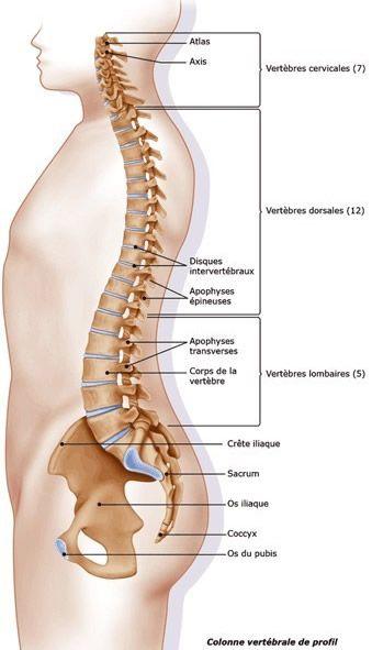 Savez-vous que votre colonne vertébrale est un lieu majeur d'enregistrement de vos soucis ? Par exemple, lescervicalgies, torticolis et autressont le rés