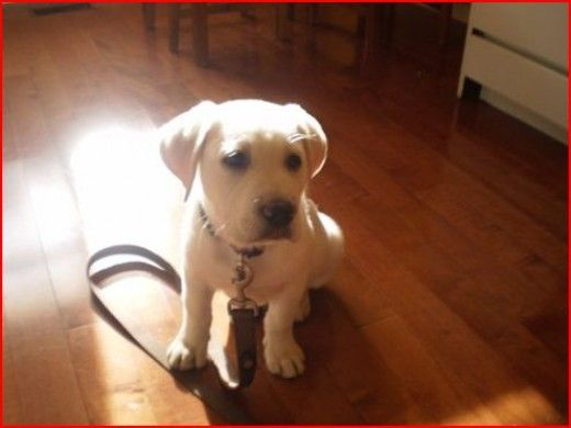 Dog Supplies: What Do I Need to Buy for My New Puppy or Dog?