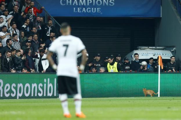 Football - Ligue des Champions - Un chat a provoqué l'interruption du match entre Besiktas et le Bayern.  (Reuters)