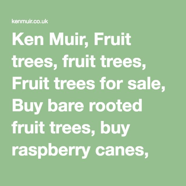 Ken Muir, Fruit trees, fruit trees, Fruit trees for sale, Buy bare rooted fruit trees, buy raspberry canes, buy strawberry plants, strawberry plants for sale, buy gooseberry bushes, fruit trees, buy apple trees, apple trees, buy pear trees, fruit trees for sale, buy plum trees, apple trees for sale, pear trees, plum trees, buy cherry trees, buy mail order fruit trees, strawberry plants, Buy strawberry plants, strawberry plants, strawberry plants for sale, buy raspberry canes, buy soft fruit…