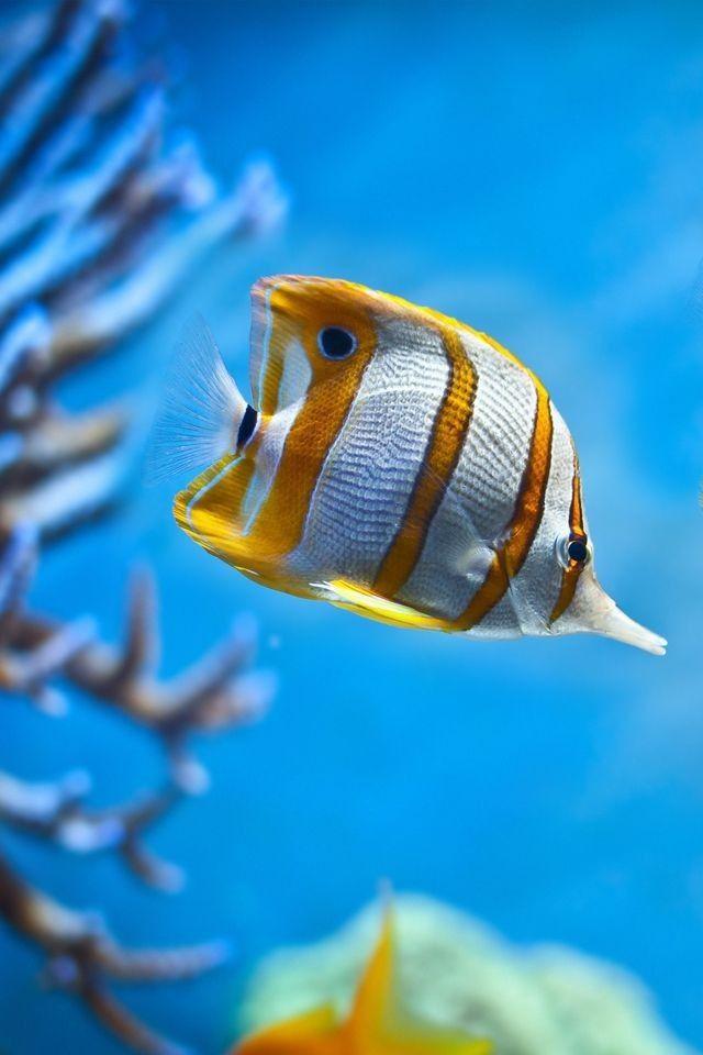 Pin By Melissa Johnson On Ocean Life Pretty Fish Fish Wallpaper Tropical Fish Aquarium