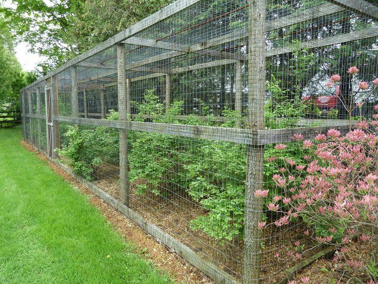 Blueberry Bush Cage In The Garden Pinterest