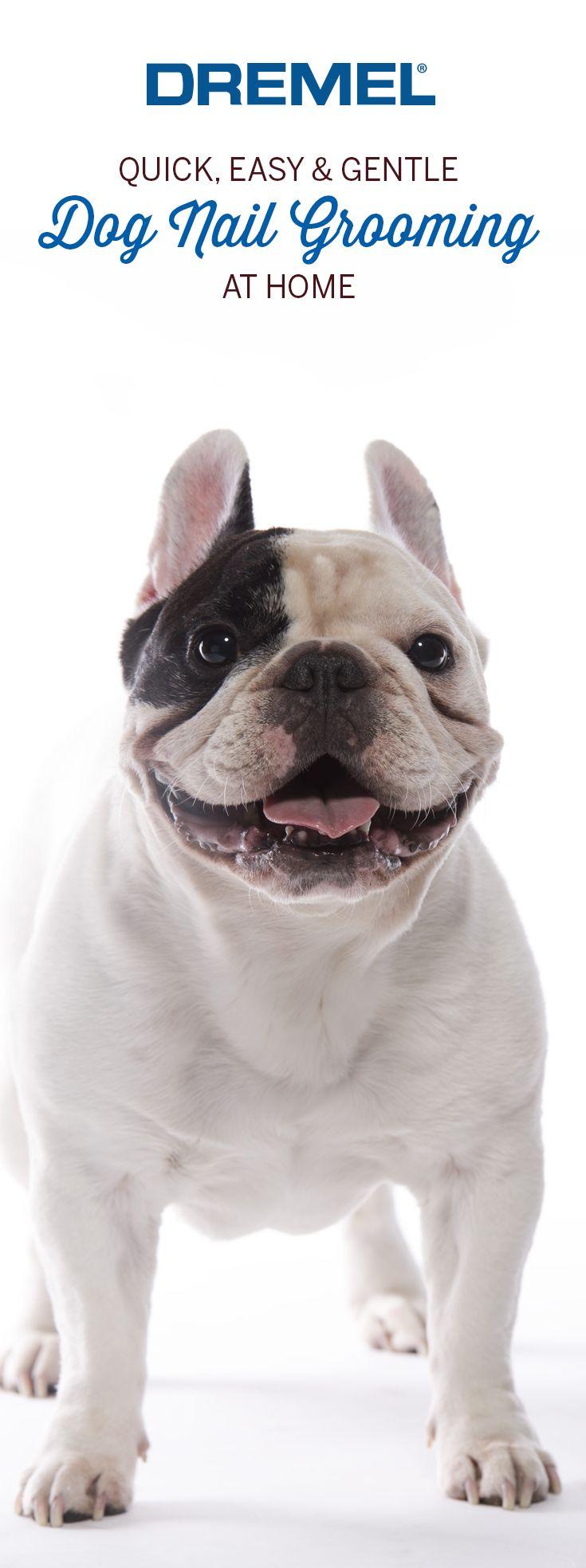 38 best Unique DIY Dog and Cat Ideas images on Pinterest | Pets, Dog ...
