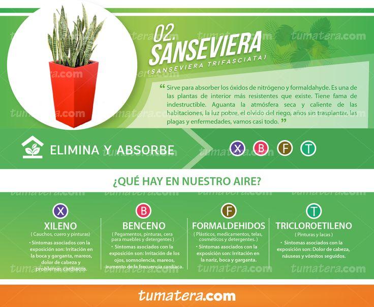 Encuéntralas en: https://www.tumatera.co/products/combo-mp-393970l-con-sanseviera/