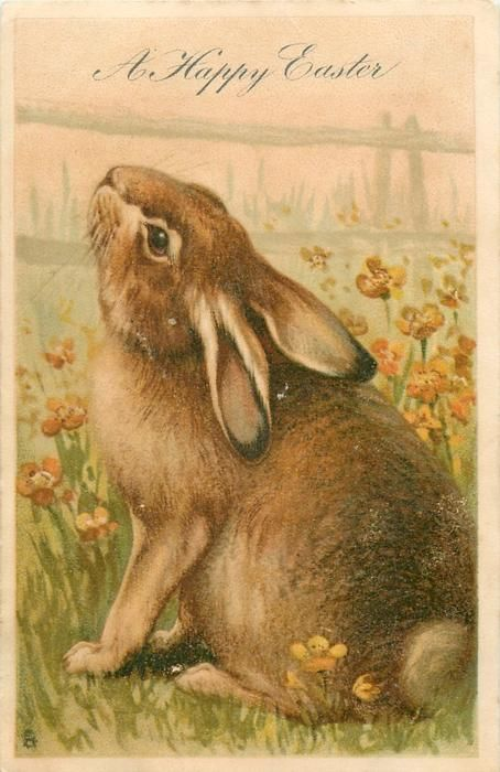 A HAPPY EASTER  rabbit sits in yellow flowers, faces left, looks up