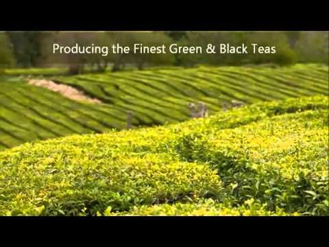 Gorreana Tea Estate || Plantações de chá Gorreana (English)