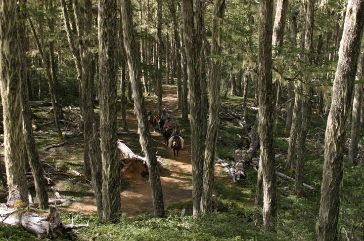 Bosque de Lenga