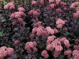 Eminence Meadows Online Garden Catalog Offers A Wide Selection Of  Perennials And Choice Perennial Plants For Your Garden.