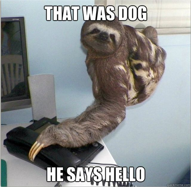 30 funny animal captions (30 pics)