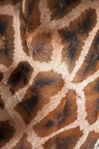 Thema jungle / oerwoud: giraffenhuid