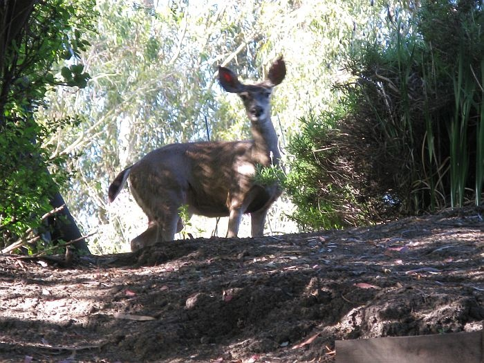 Wild Backyard Animals : 1000+ images about Wild Animals in my Backyard on Pinterest  Gardens