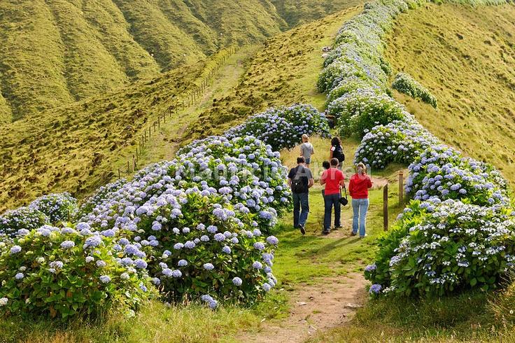 Walking trail in Faial island. Azores, Portugal
