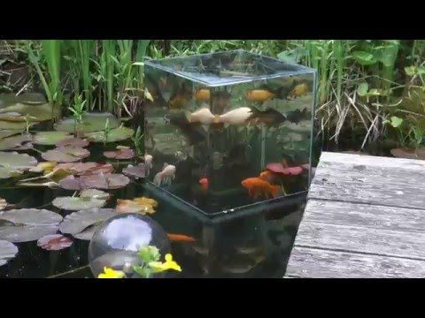 He Flips A Glass Tank Upside-Down, Now Watch What The Fish Do Inside… Incredible! -