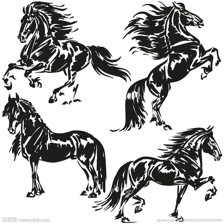 9 best images about friesians on pinterest  click in