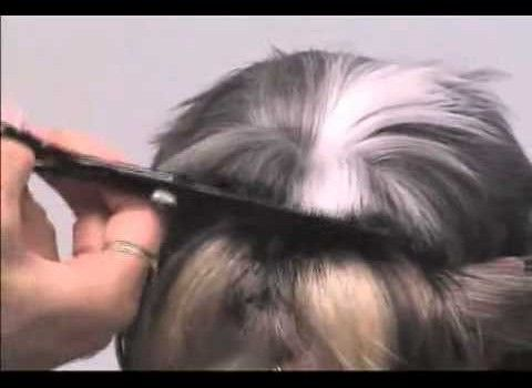 How To Groom Your Shih Tzu by Award Winning Groomers! - Wild About Dogs