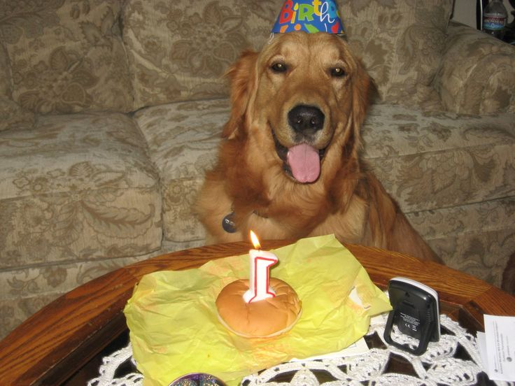 Happy Birthday Dear Dogs!   The Animal Rescue Site Blog