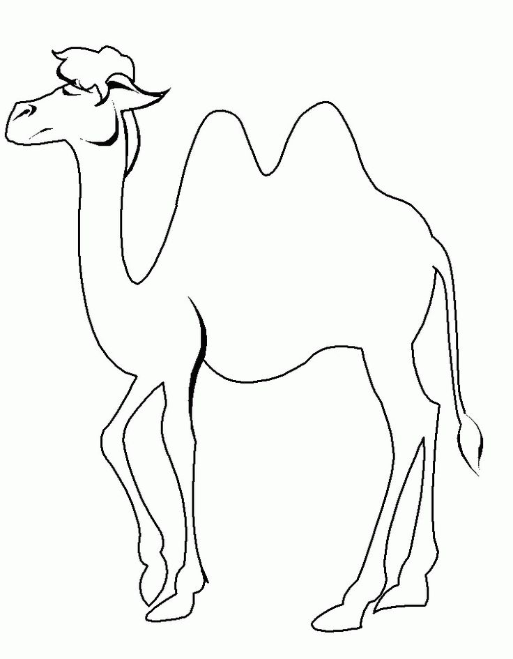 Camel Coloring Page Sheets