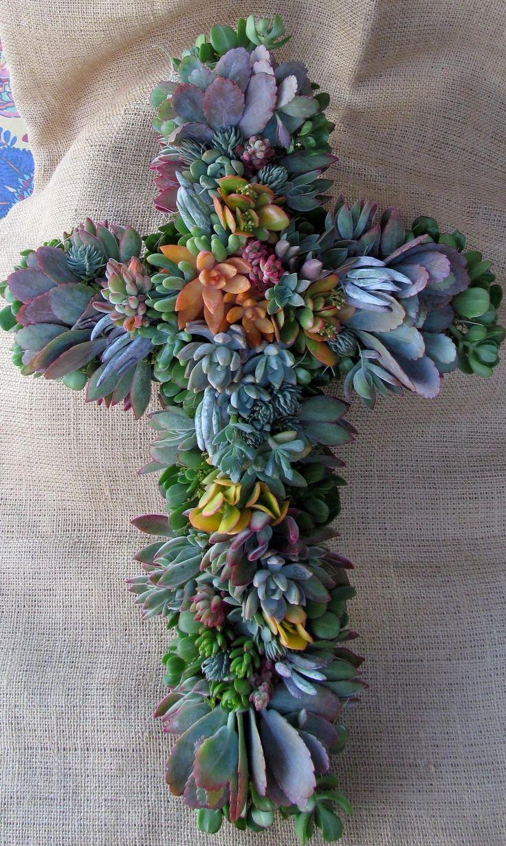 best flowersucculent images on pinterest succulents gardening