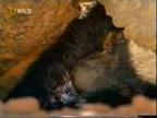 Der unerschrockene Honigdachs Video - cs_vs_gta - MyVideo