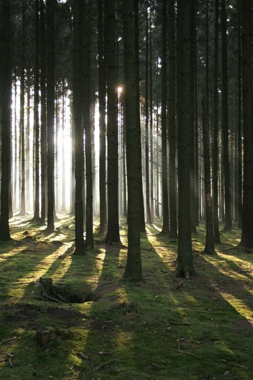Belgium - Ardennes Forest