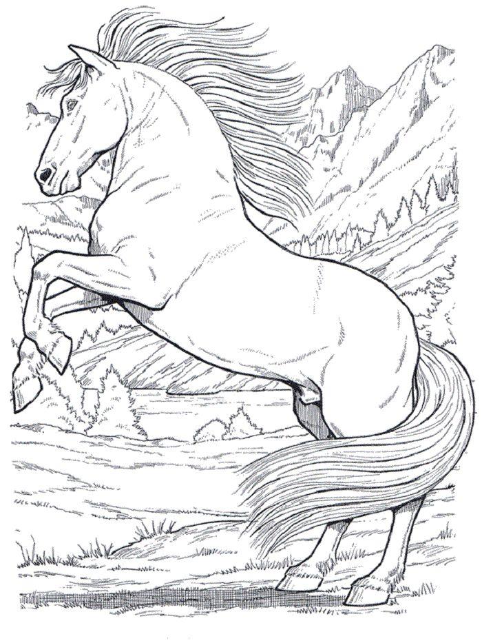 schöne ausmalbilder pferde 02