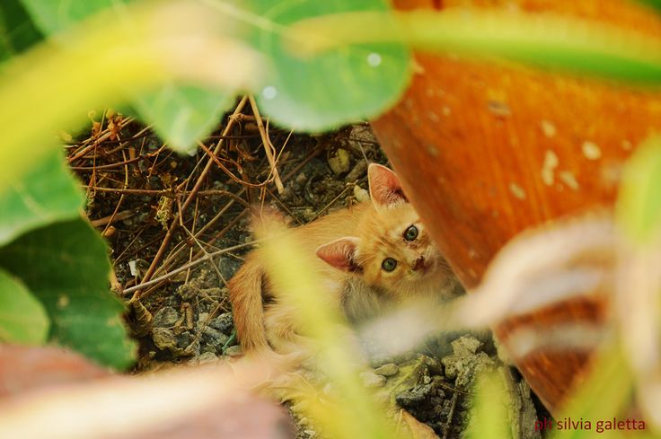 gattino | Flickr - Photo Sharing!