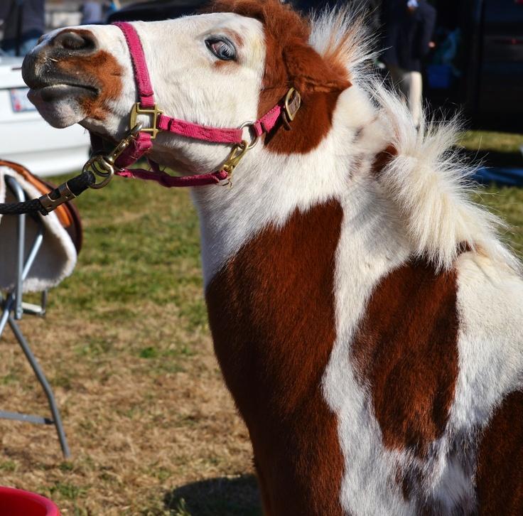 Nasty little pony named Sparkles