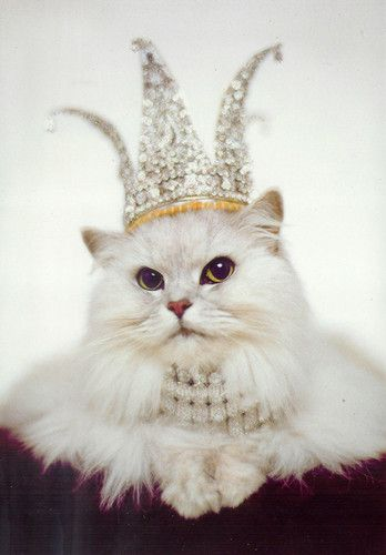 le queen...omg I love this... :): Kitty Cat, Kitty Queen, Birthday Cards, Queen Kitty, Pet, The Queen, Princesses Kitty, Kitty Kitty, Persian Cat