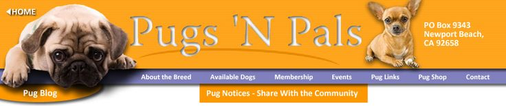 Repin!!! | Repin!!! | Repin!!! | Repin!!!   The sweetest, kindest, most loving people of Pugs 'N Pals helped me in my time of need.  I will be forever indebted.  Please find it in your heart to give to this amazing rescue: Pugs 'N Pals • P.O. Box 9343 • Newport Beach, CA 92658             Pugs rescue dogs