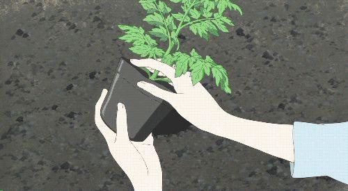 #Rimedi naturali per le piante 3: bicarbonato, aceto, propoli, olio d'oliva