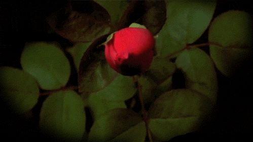 J'ai dit à l'arbre : parle-moi de Dieu, et il s'est mis à fleurir. Rabindranath Tagore