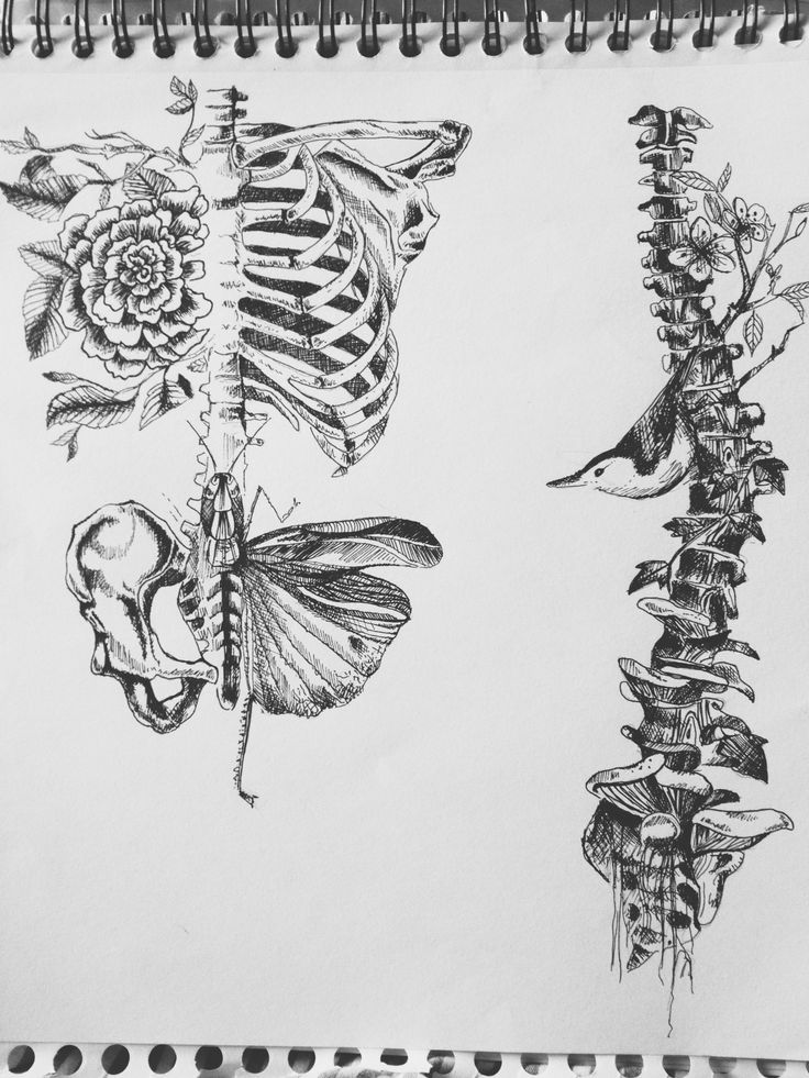 skeleton, flower, bugs sketch (replica)
