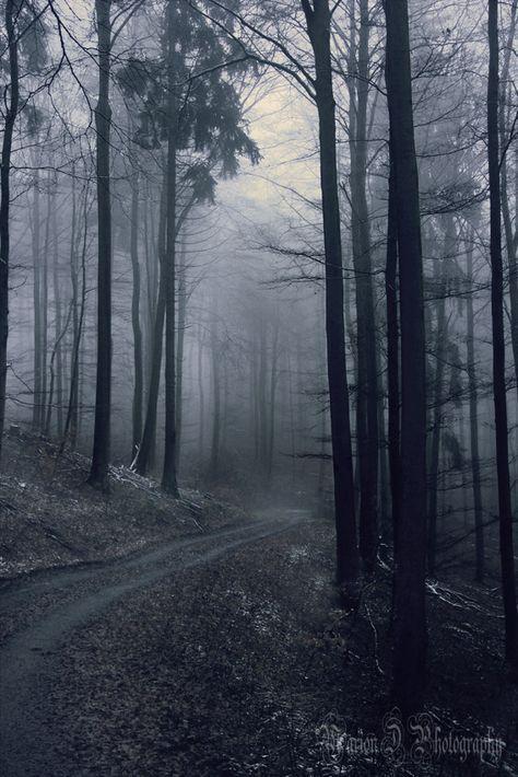 Tajemný les F5c5338184aecc405102afaa18bc6d86