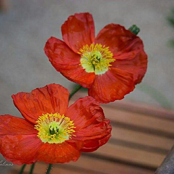 Un sueño, un jardín. ..Mykonos, Olmue