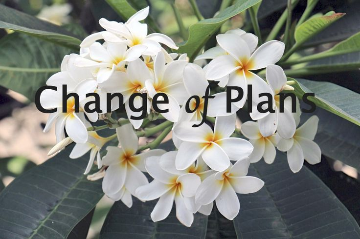 (Change of Plans) - Lene Fogelberg