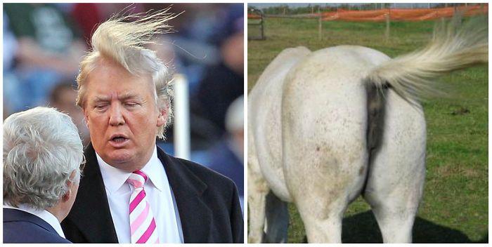 13 choses qui ressemblent étrangement à Donald Trump : le cul d'un âne