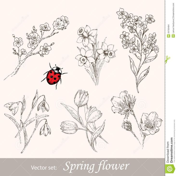 Spring Flower Set - Download From Over 40 Million High Quality Stock Photos, Images, Vectors. Sign up for FREE today. Image: 29700484