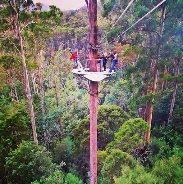 Zipline through the forest.