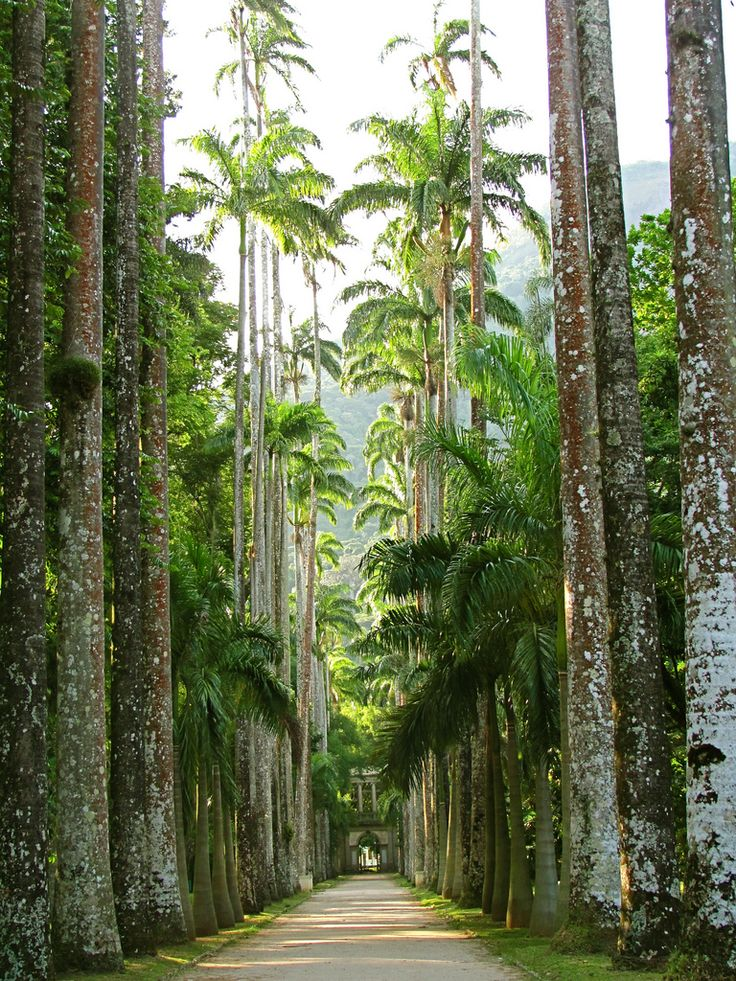 Rio de Janeiro Botanical Gardens,Brasil.  One of the most interesting I have ever been to.