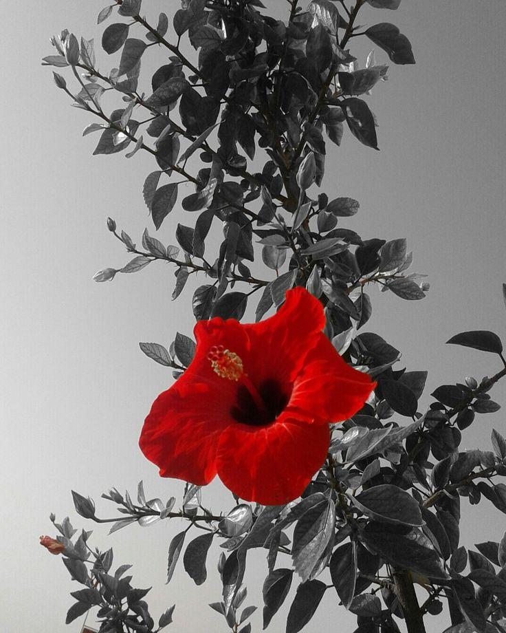 #kırmızı #red #flowers #splash