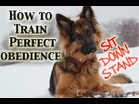 Several excellent puppy to advanced dog training videos. The guy makes it look like childs play. :)