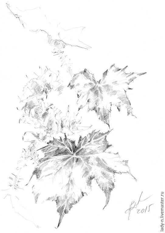 Купить Бегония. Графика - черно-белый, графика, рисунок, карандаш, цветы, стебли, колокольчики, бегония