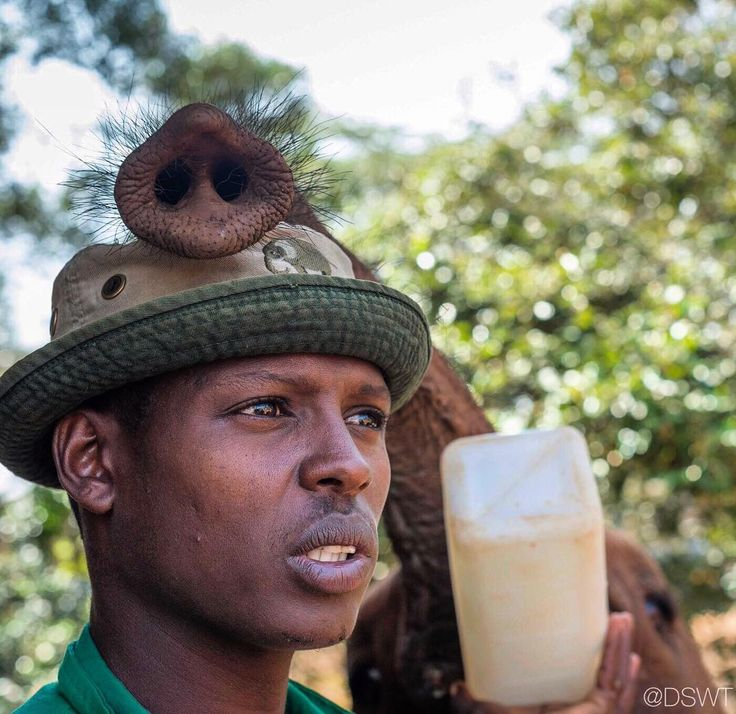 """20.1k Likes, 298 Comments - David Sheldrick Wildlife Trust (@dswt) on Instagram: """"Hats serve a dual purpose at the DSWT: Sun protection for the Keepers and stylish """"trunkrest"""" for…"""""""