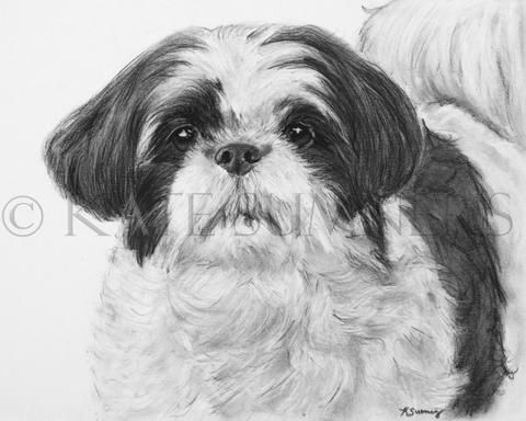 79 best images about Pet Art on Pinterest | Charcoal ...