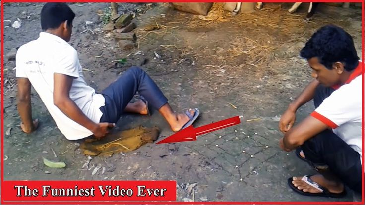 The Funniest Video Ever | Really Funny Videos | World's Funniest Videos|...