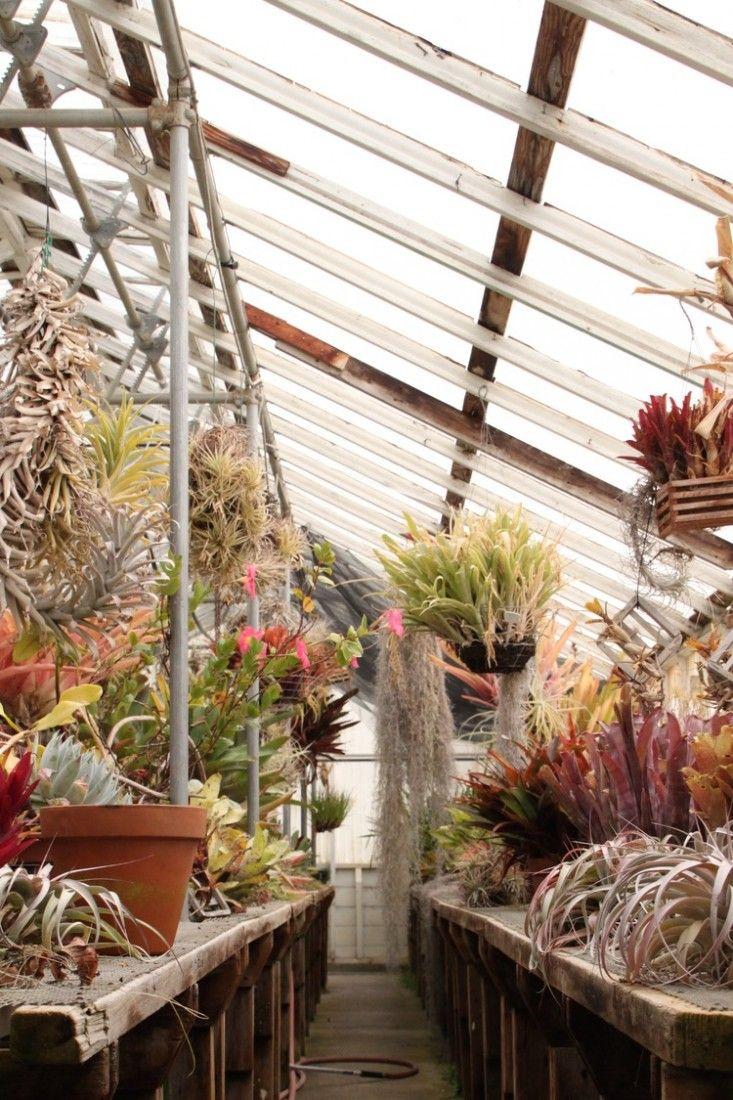Physic garden wikipedia - Shelldance Orchid Gardens In Pacifica Ca Gardenista